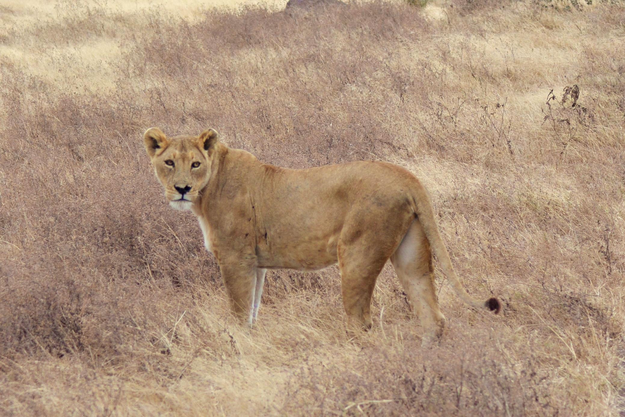safari_tanzania_ngorongoro_3