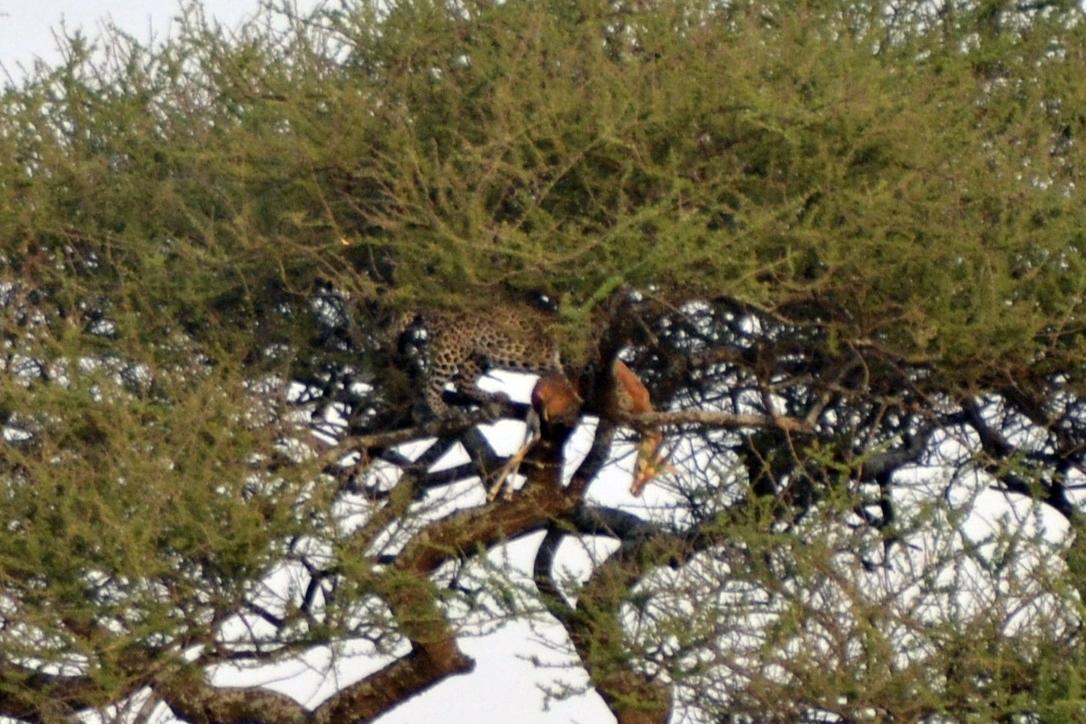 safari_tanzania_serengeti_1