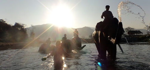 chiangmai_tailandia_elefante