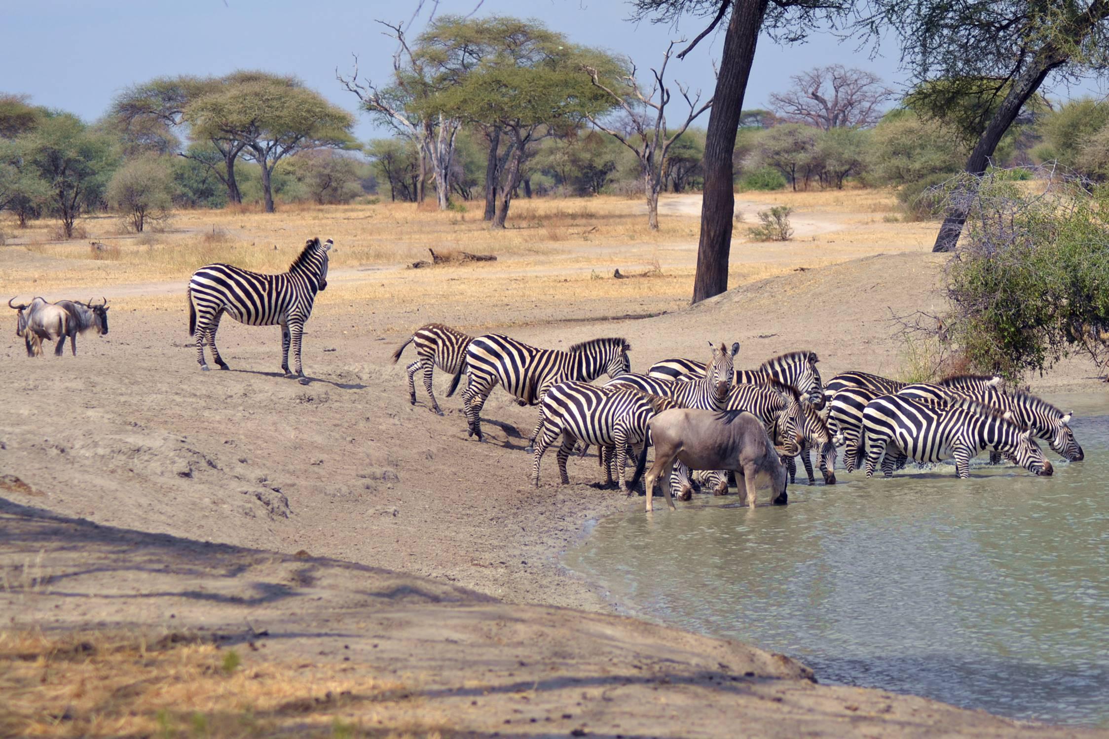 safari_tanzania_tarangire_1