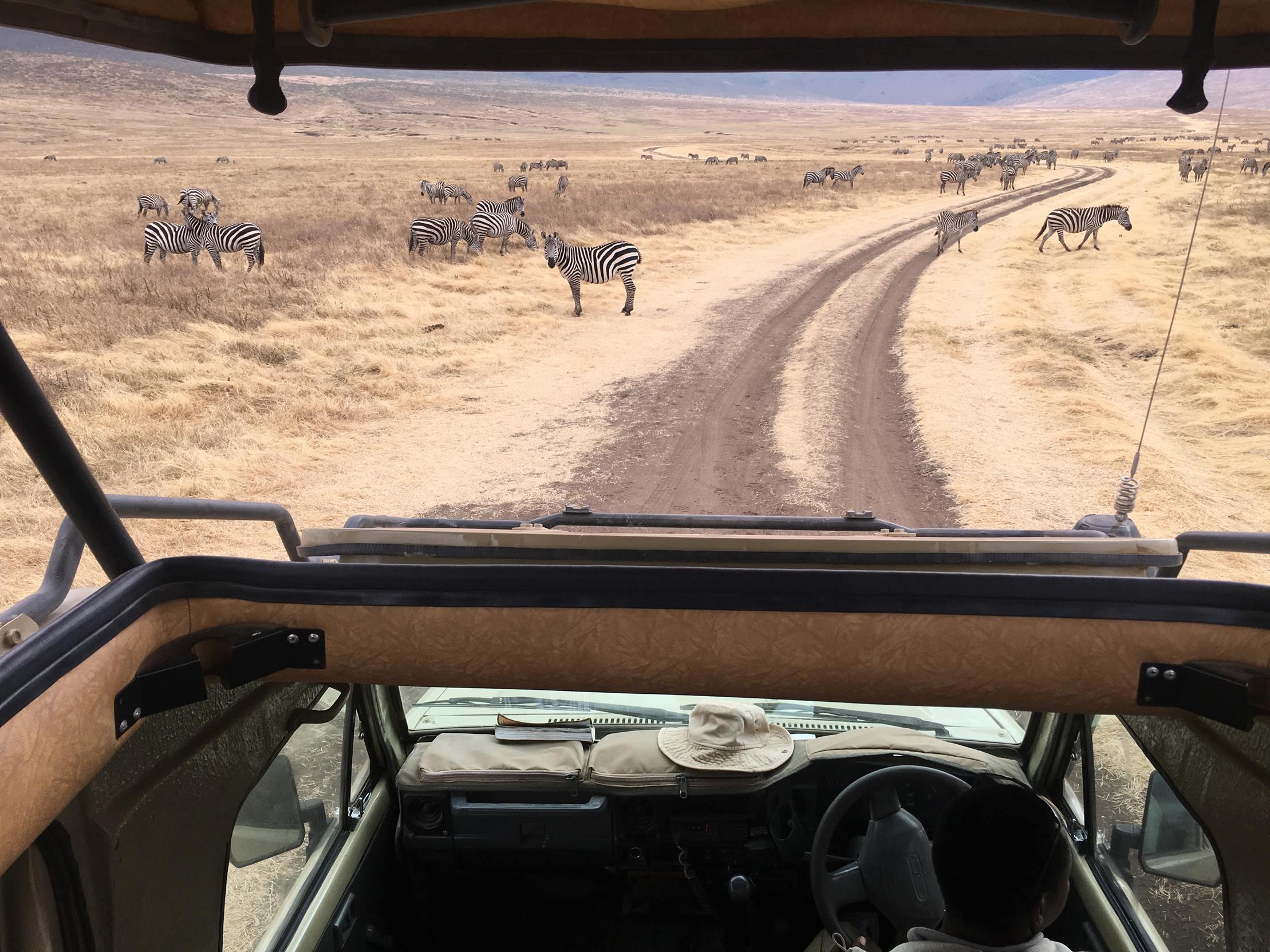 safari_tanzania_ngorongoro_12
