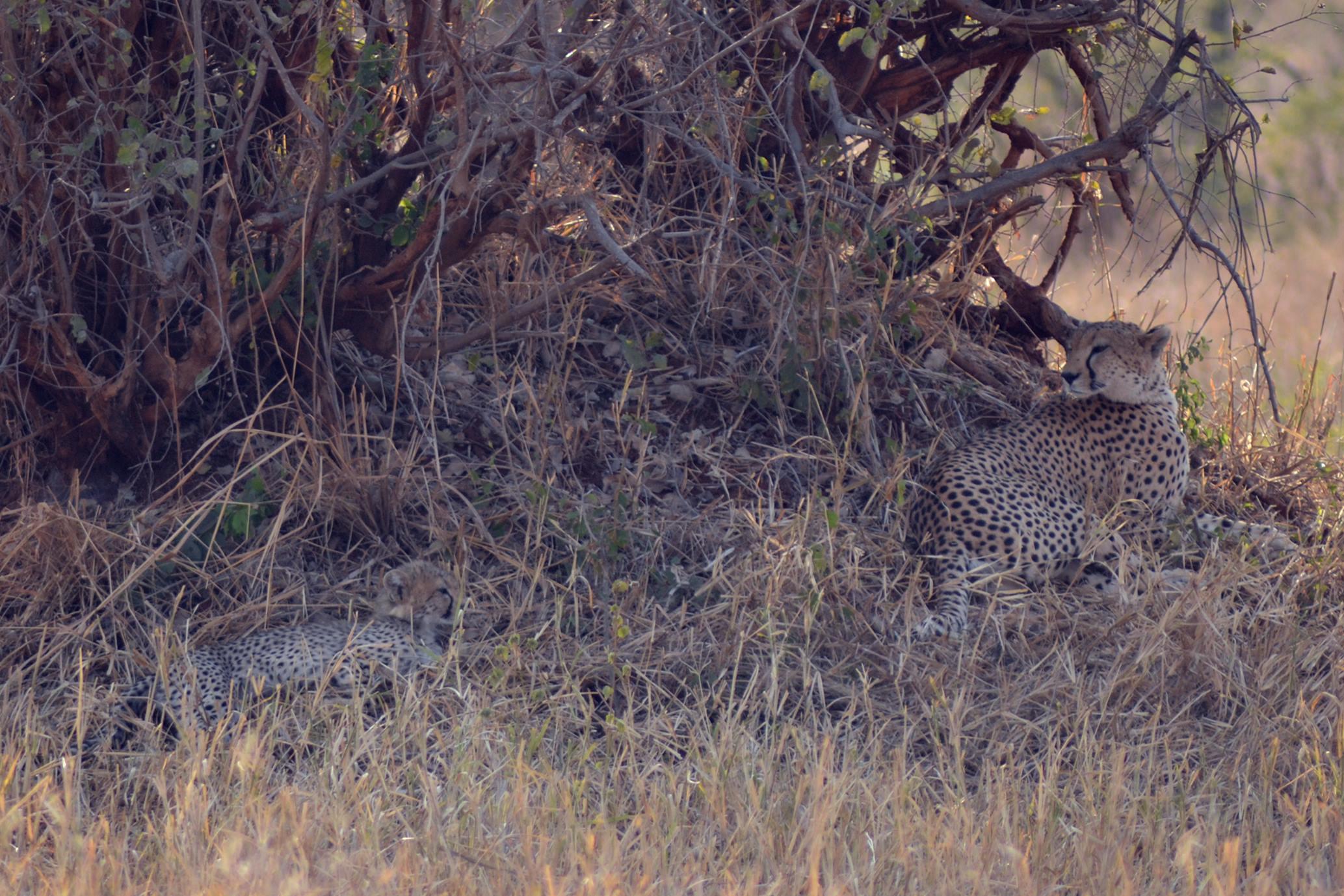 safari_tanzania_tarangire_8