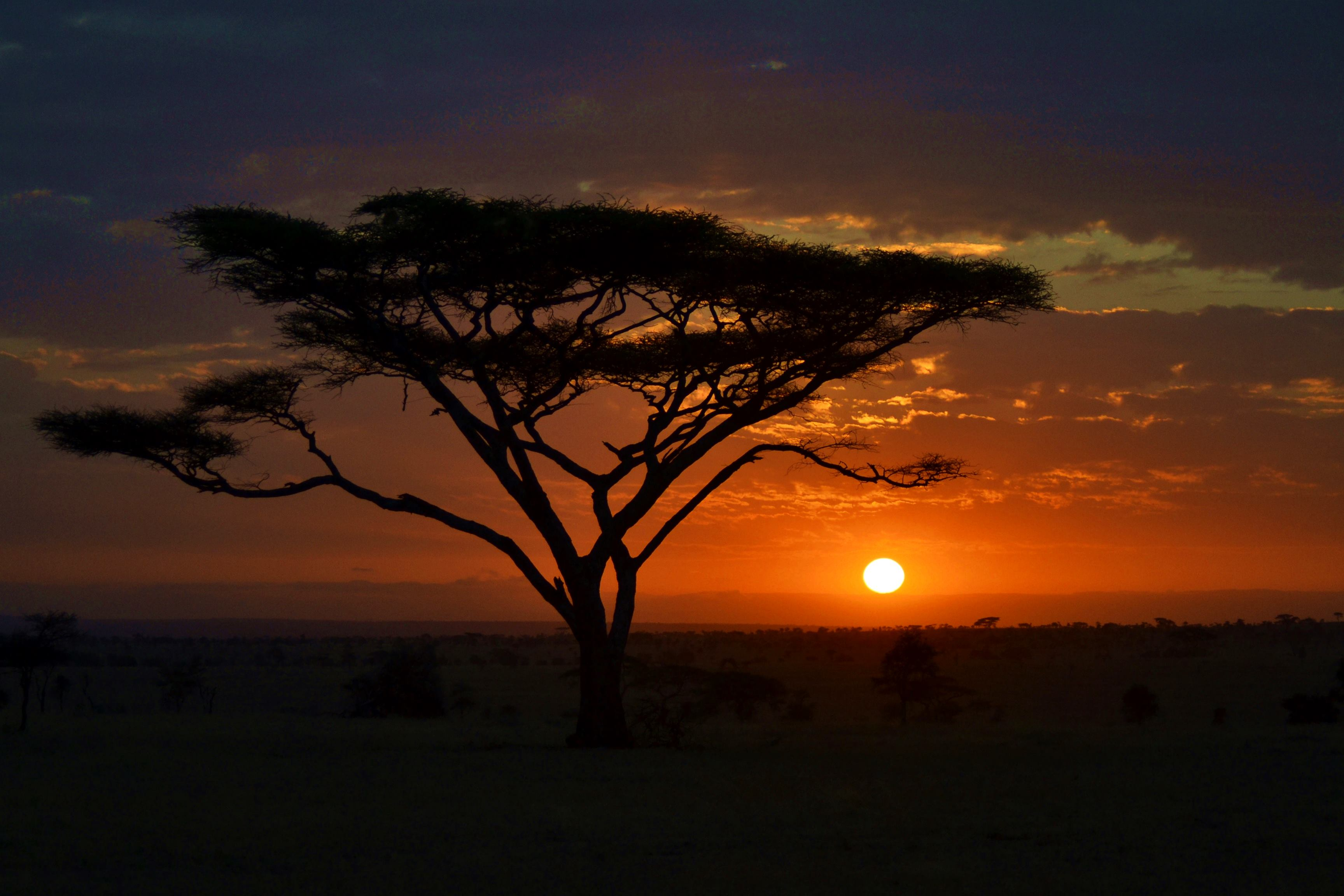 serengeti_tanzania_nascerdosol