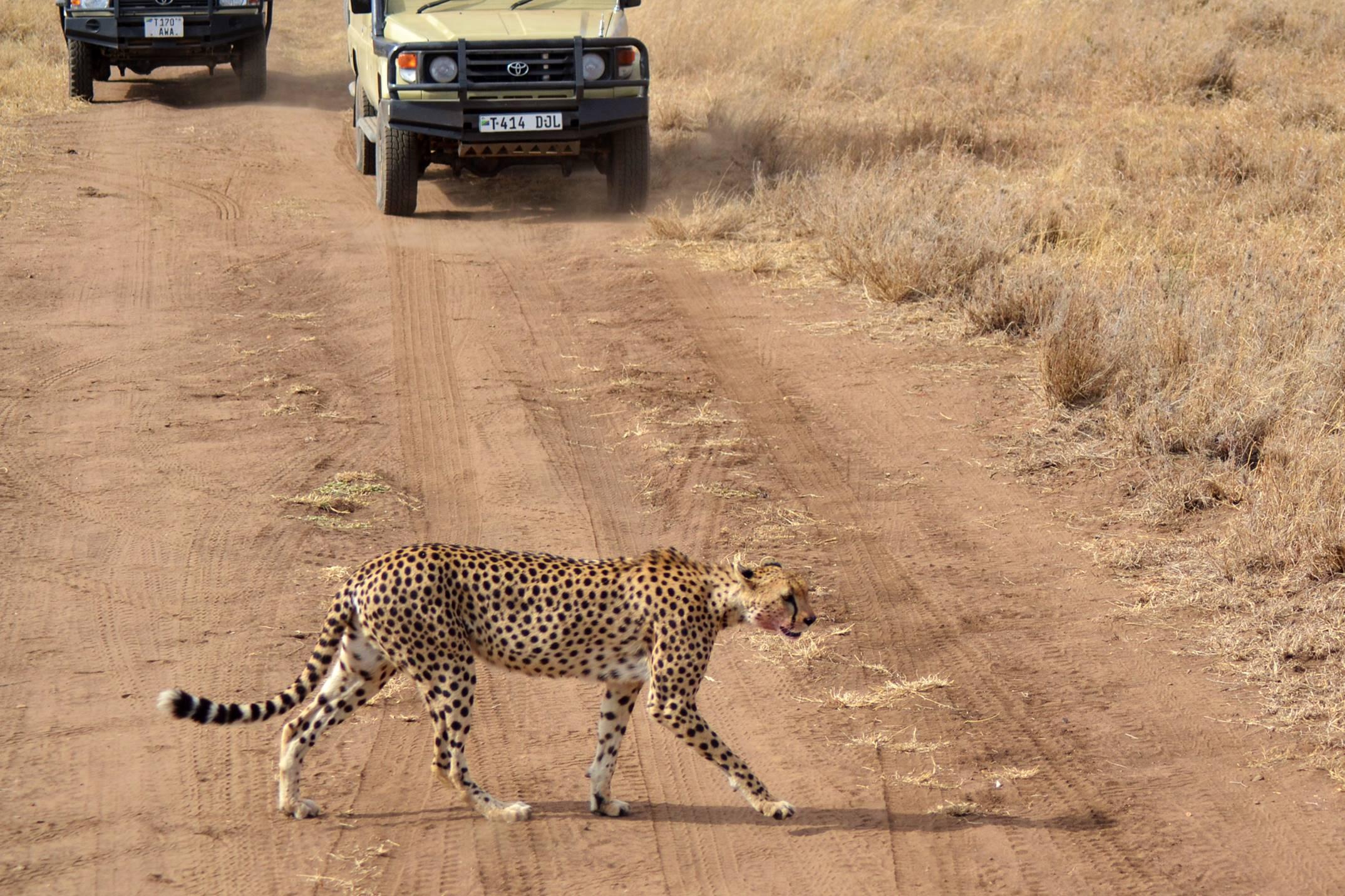 safari_tanzania_serengeti_6