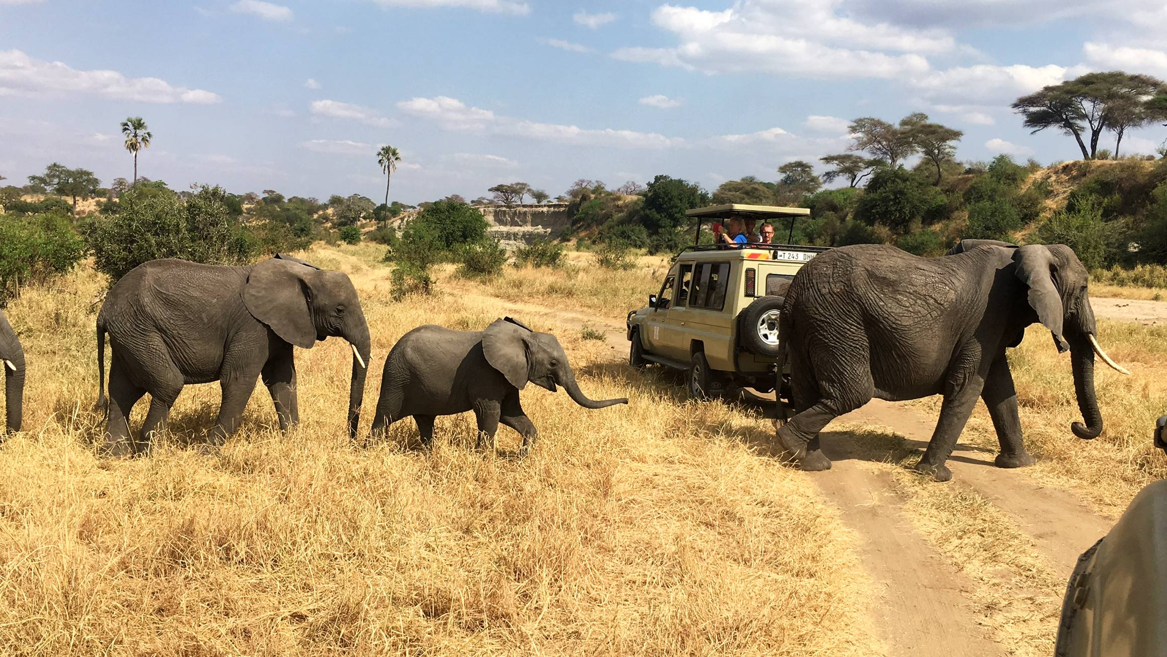 safari_tanzania_tarangire_10