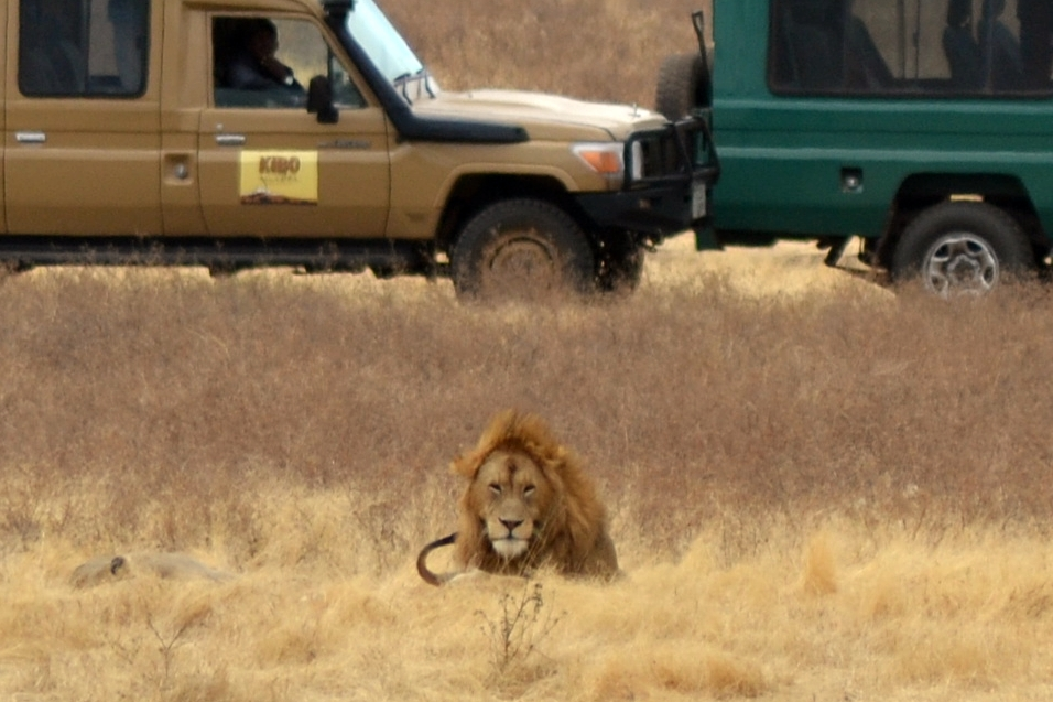safari_tanzania_ngorongoro_10
