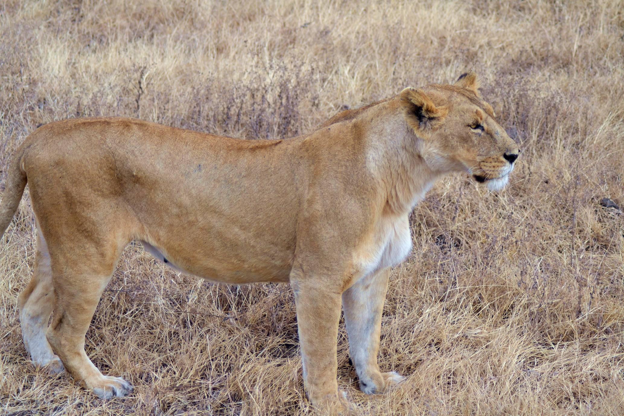 safari_tanzania_ngorongoro_4