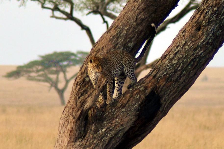 safari_tanzania_serengeti_2