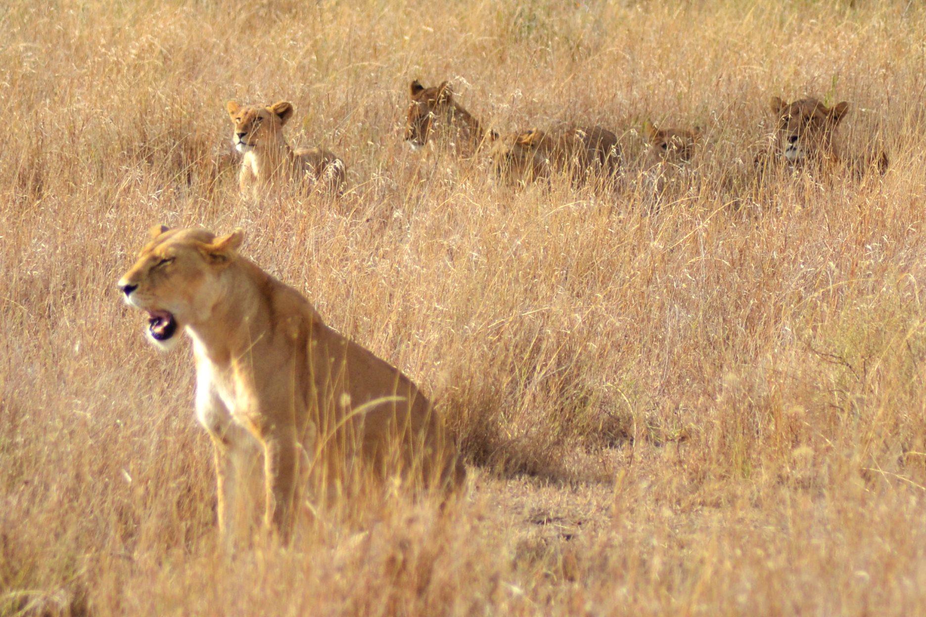 safari_tanzania_serengeti_5