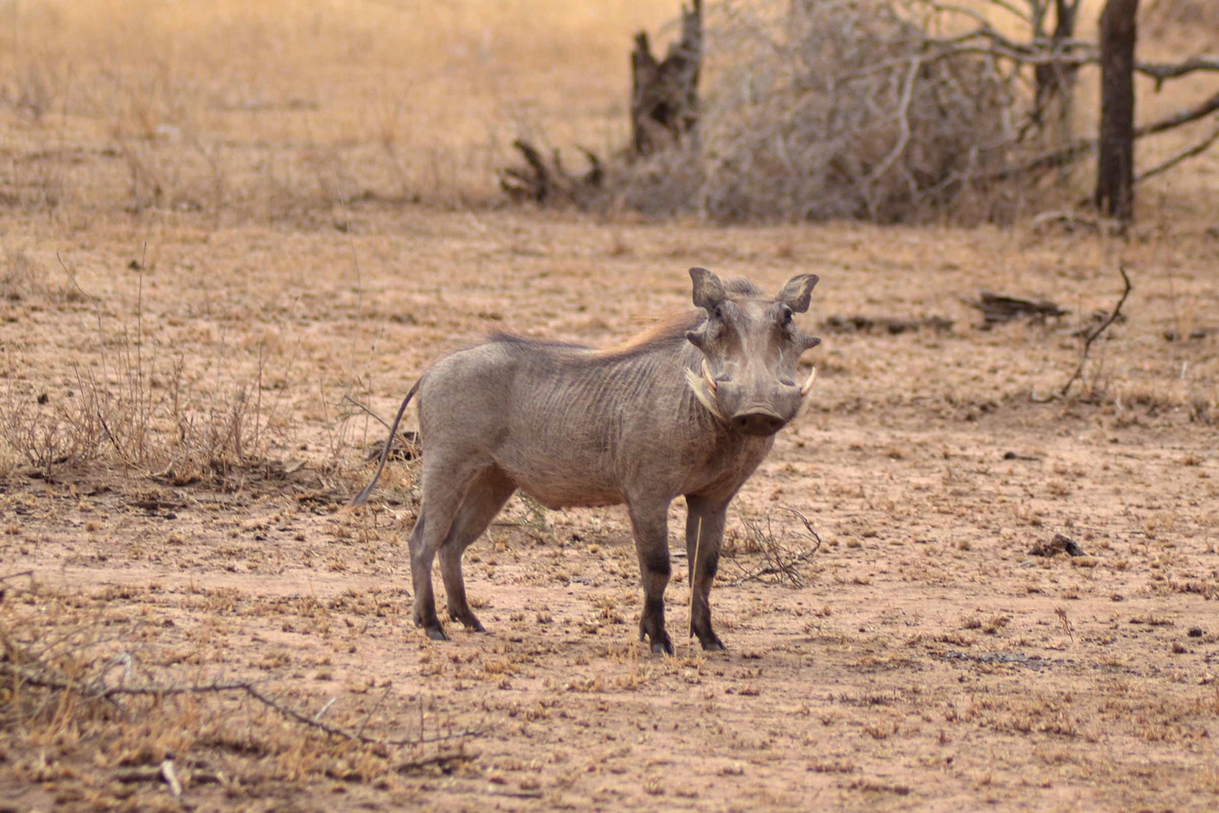 safari_tanzania_serengeti_8