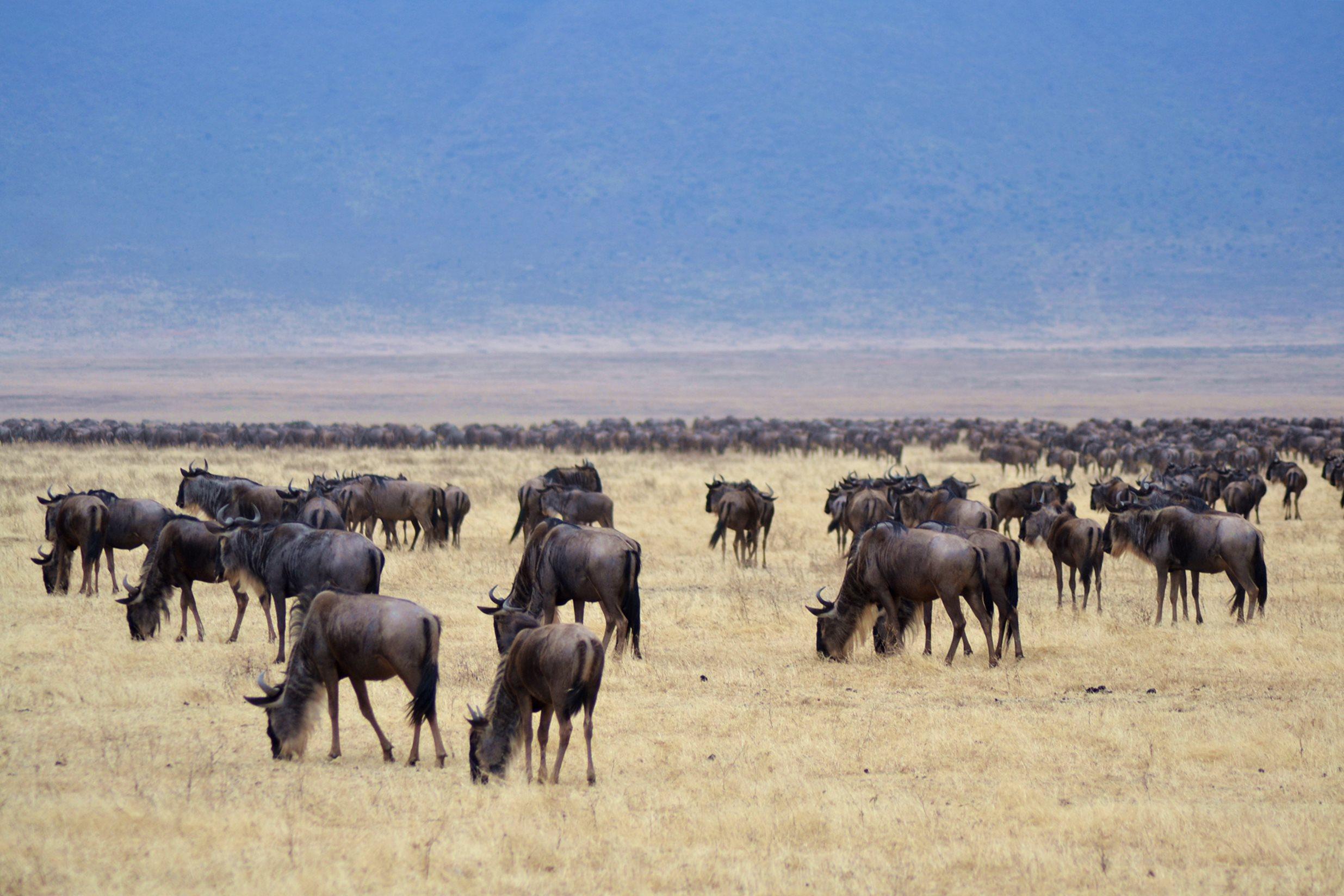 safari_tanzania_ngorongoro_2