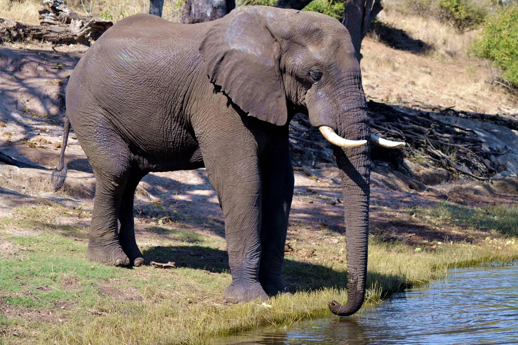 chobe_botswana_elefante_1