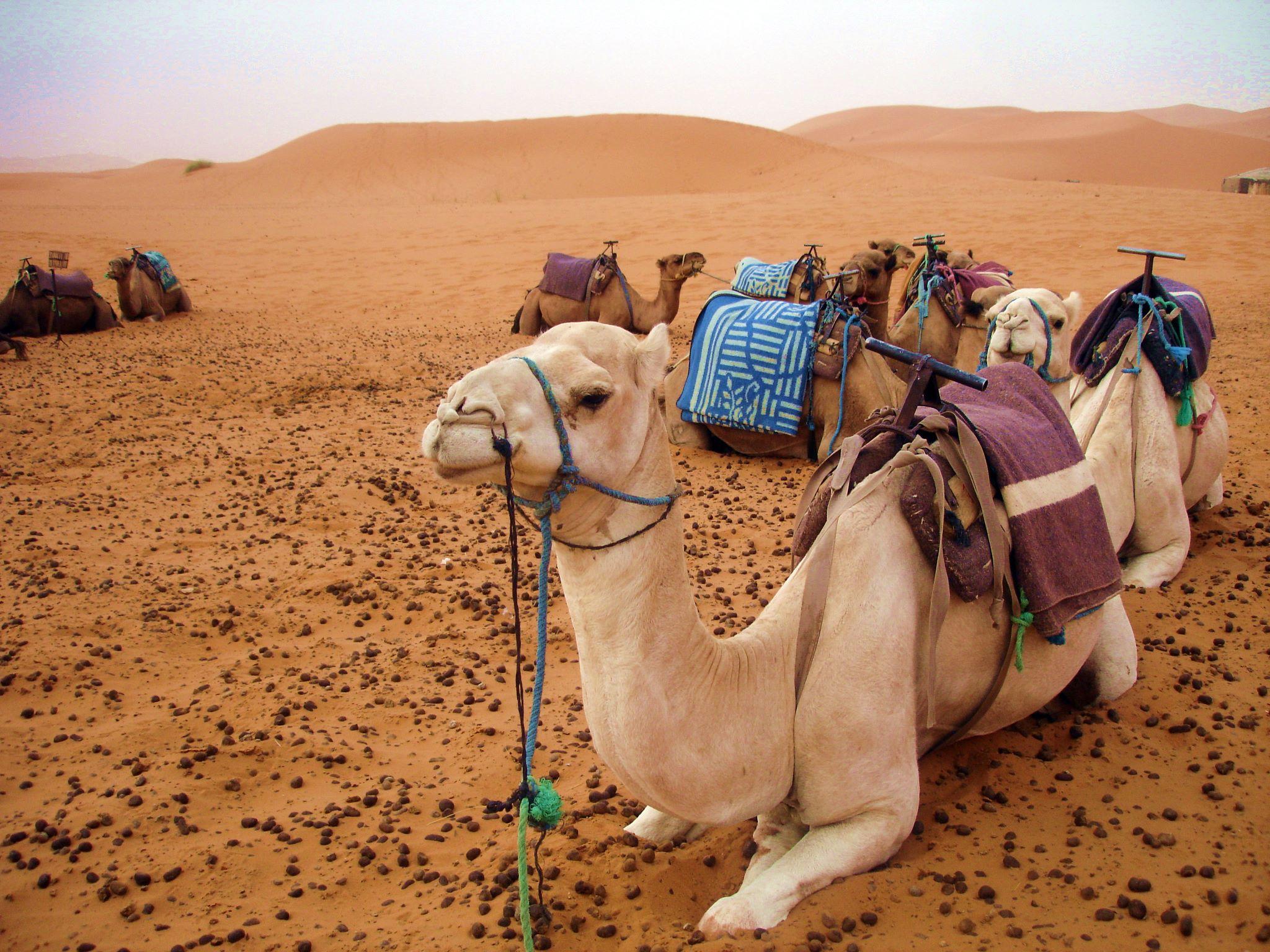 saara_marrocos_merzouga_2