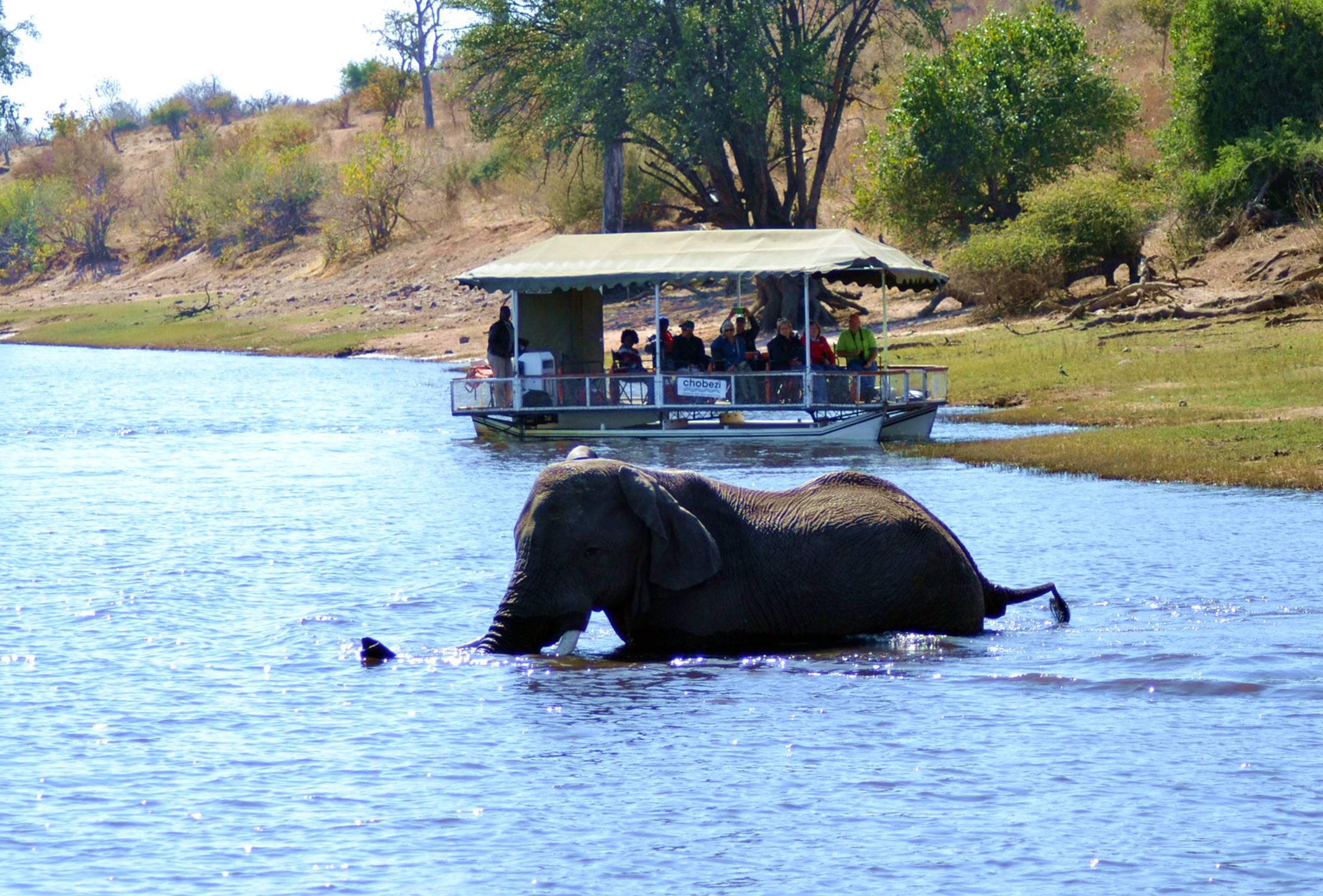 chobe_botswana_elefante_2