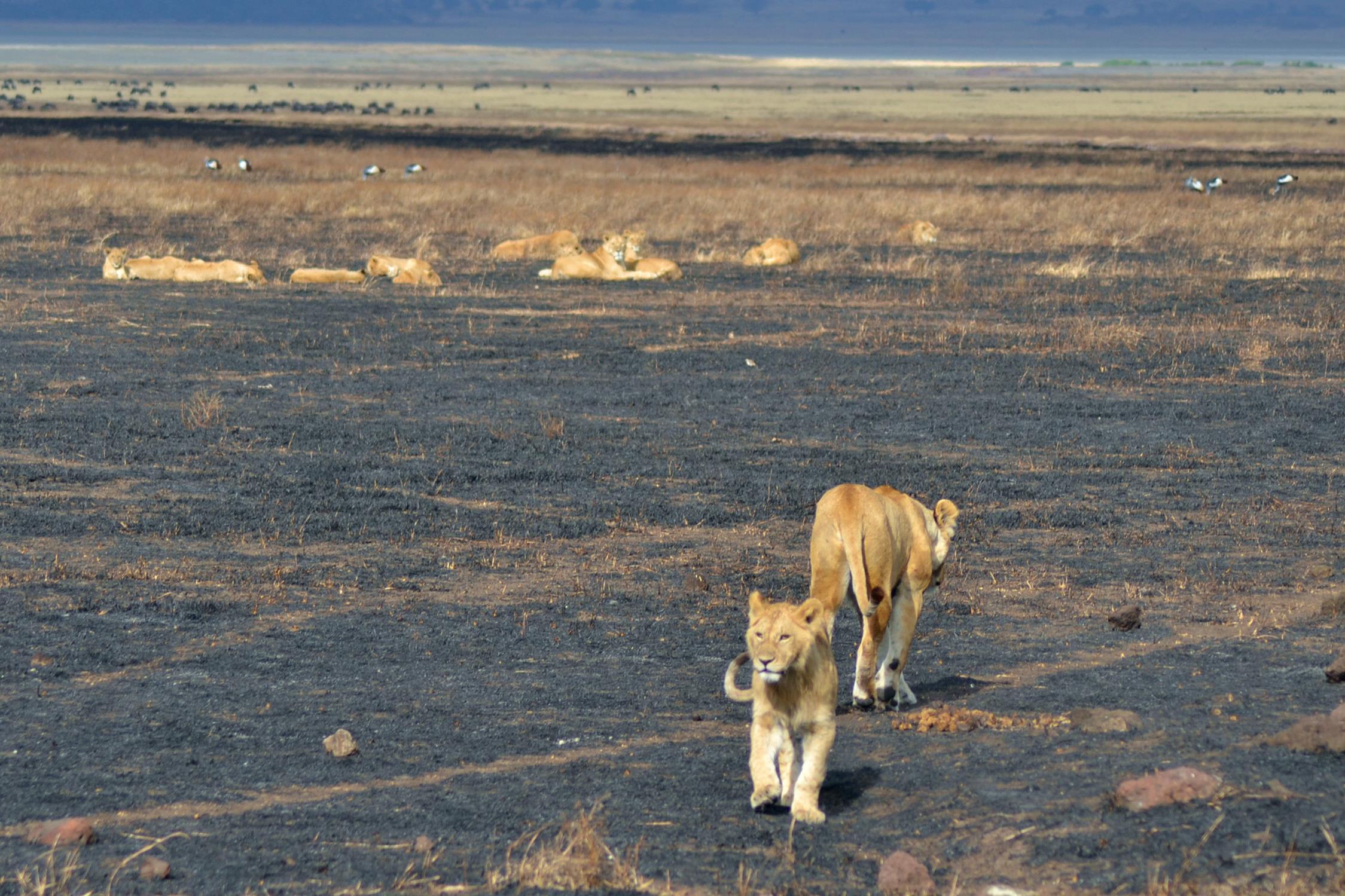 safari_tanzania_ngorongoro_5