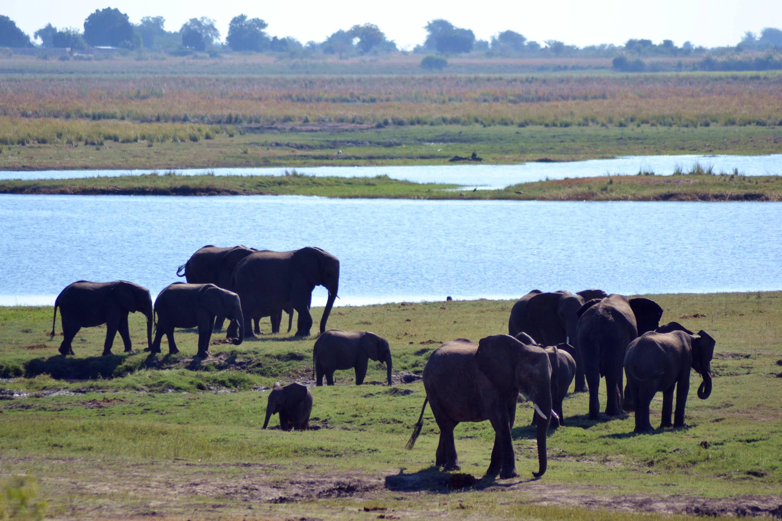 chobe_botswana_elefante_4