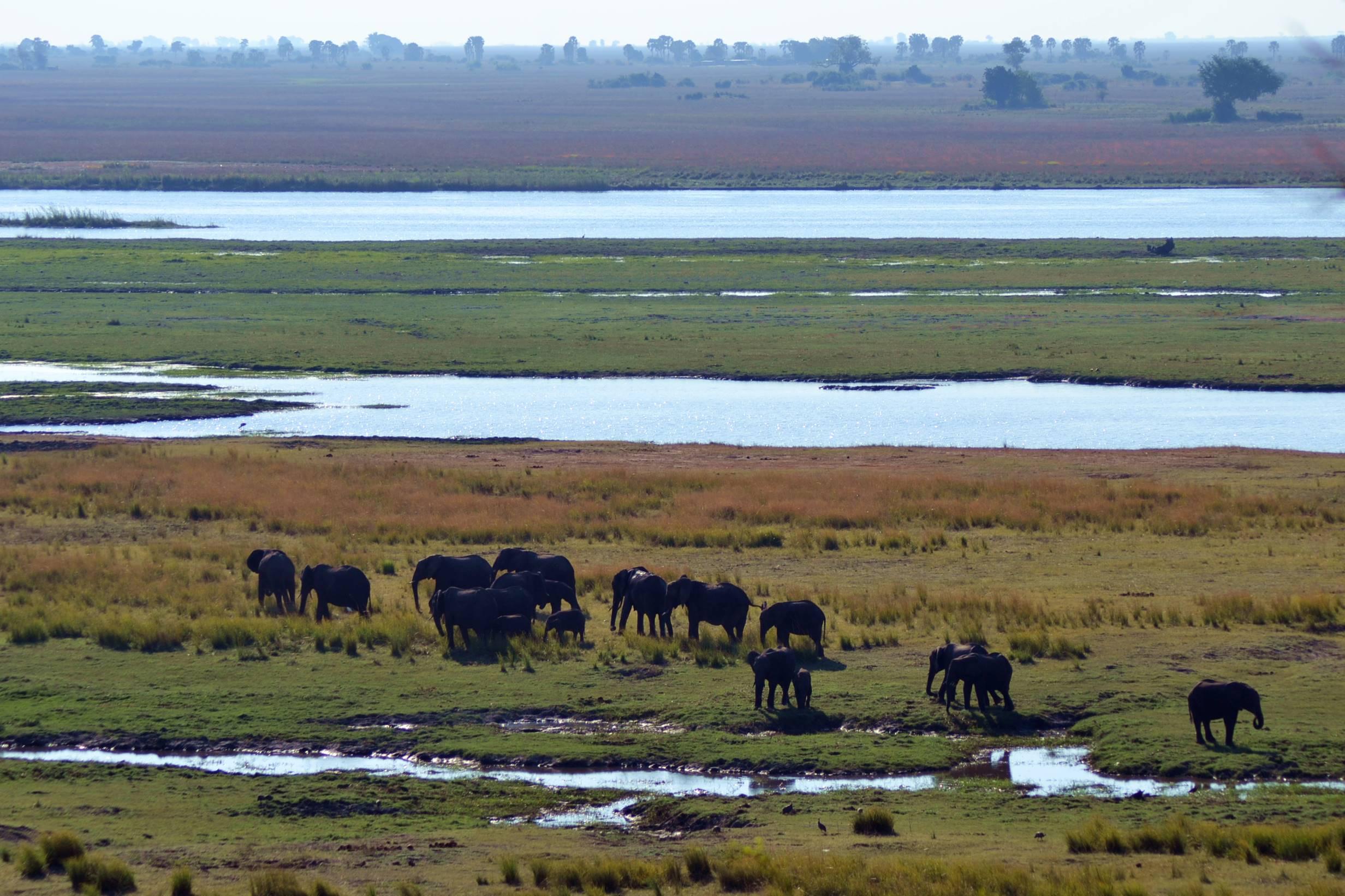 chobe_botswana_elefante_5
