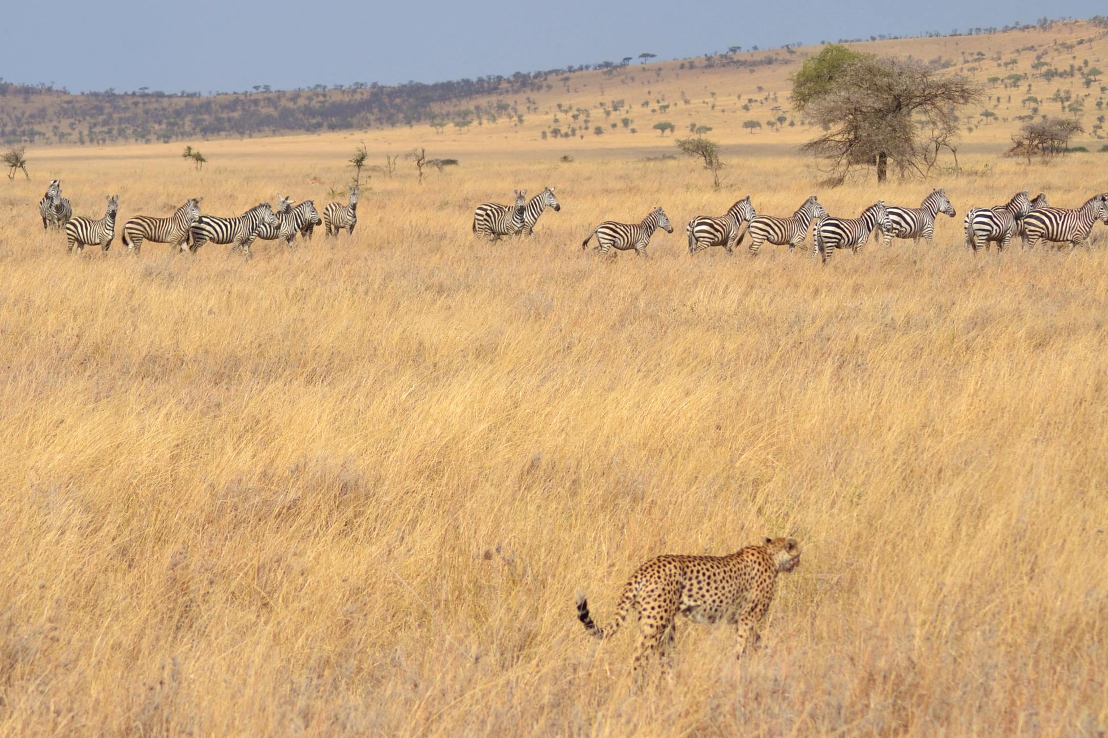 safari_tanzania_serengeti_7