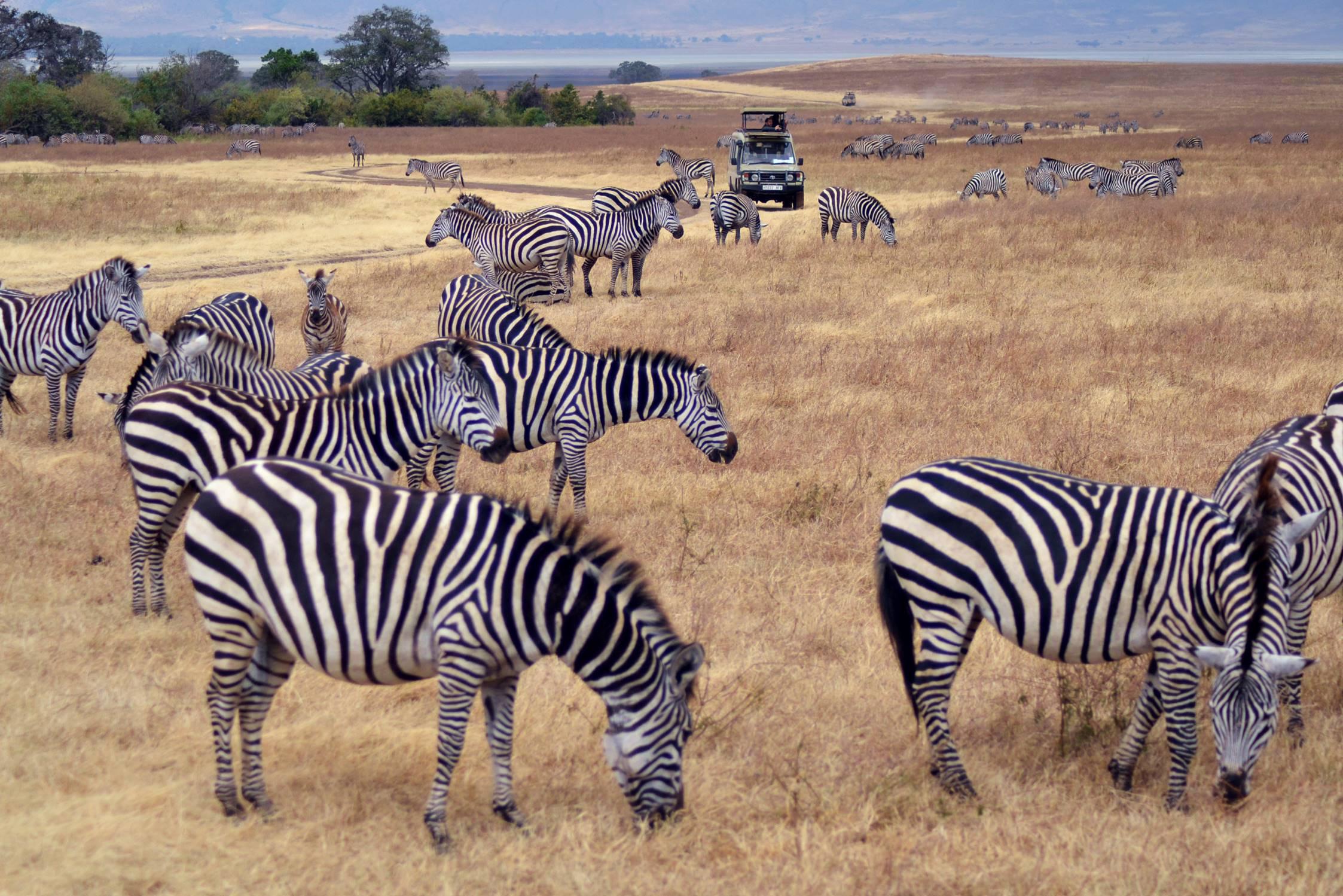 safari_tanzania_ngorongoro_8