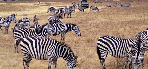 África Safári Tanzânia