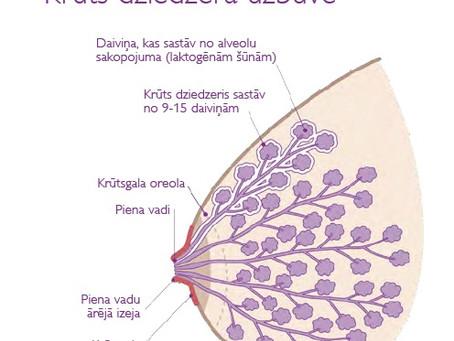 Krūtsbarošana - kas būtu jāzina?