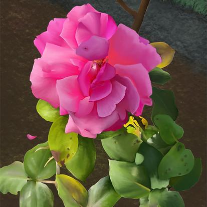 Single Irish Rose