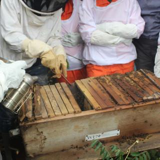 Beekeeping Field School  (1).JPG
