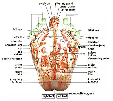 Map of the body is on the foot