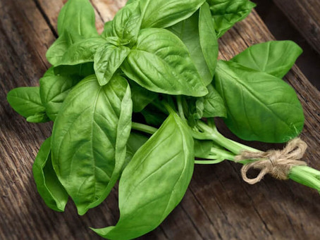 10 Ways To Use Basil