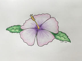The Purple Hibiscus Flower