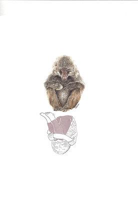 Valérie Etterlen - Elle et le Macaque japonnais - 32x24 cm - encadré.