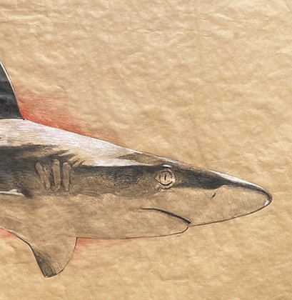 Olivier Legan - Grand requin - 70x150cm