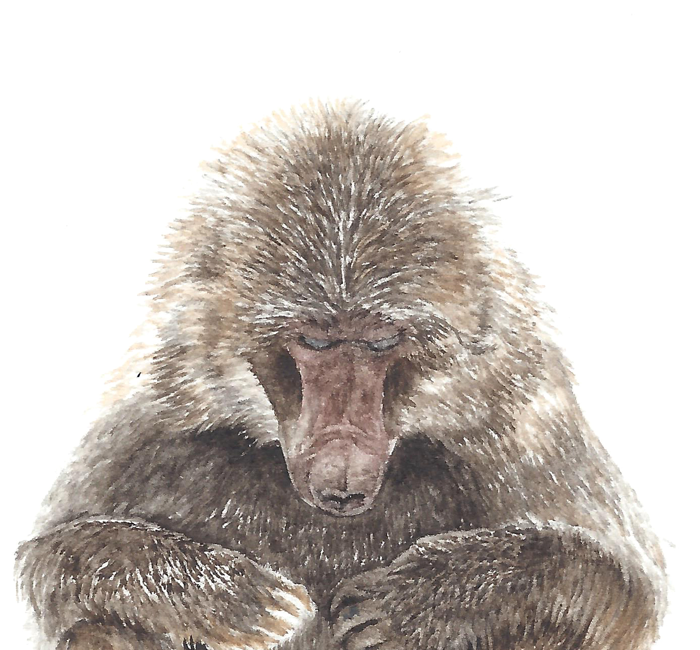 Elle et le macaque japonnais - Valérie Etterlen