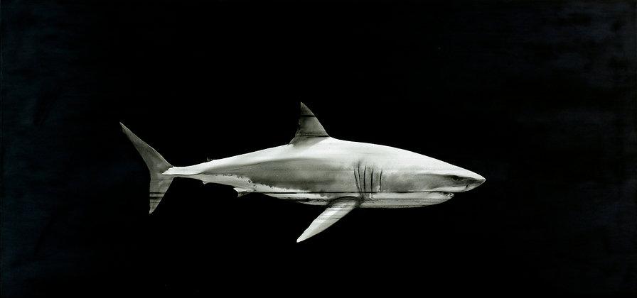 Vendu - Stéphane Joannes - Requin - 80x170cm