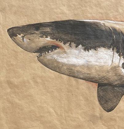 Olivier Legan - Requin blanc - 70x130cm