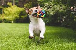 Happy dog at park