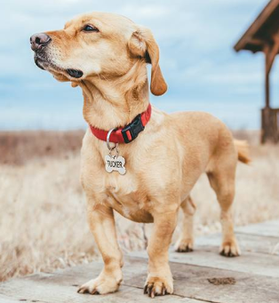 What Should I put on my Pet's ID Tag?