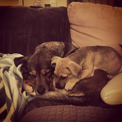 Gunther with Emmy dog sit