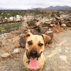 Dog Hike CV PETS