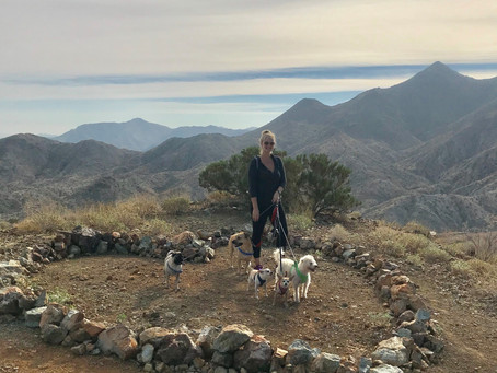 Dog Friendly Hiking in the Coachella Valley