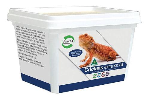 Crickets Extra Small