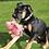 Thumbnail: Kong Phatz Pig