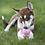 Thumbnail: Kong Easy Treat Puppy
