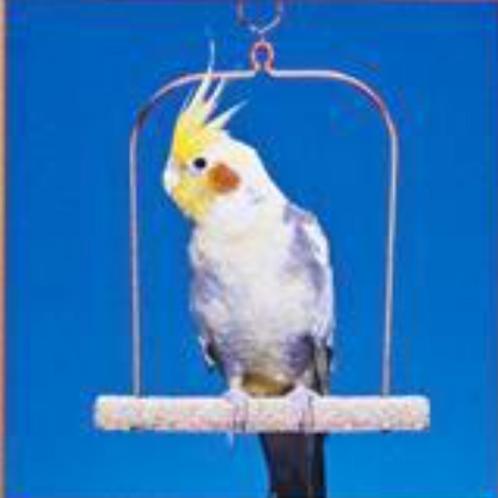 BirdLife Swing Cement & Wire Frame
