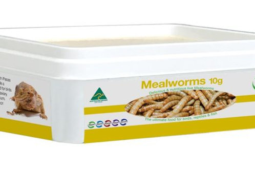 Mealworms 10g