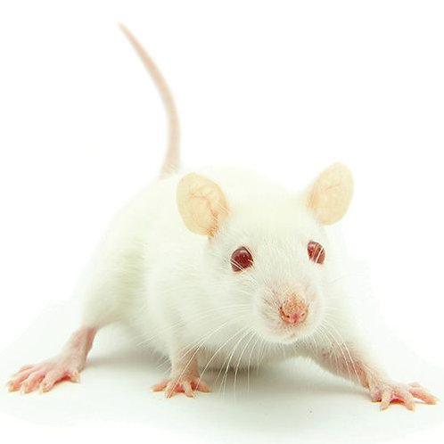 Frozen Pinkie Mice