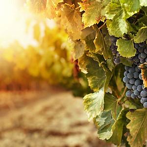 Cuvée Wine Cellars Product Shots