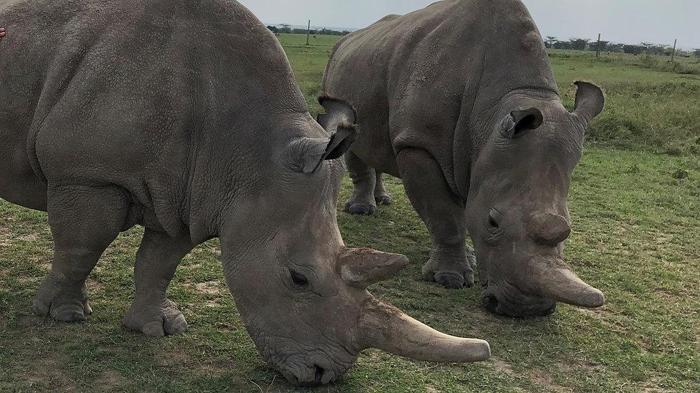 rhino (2).jpg