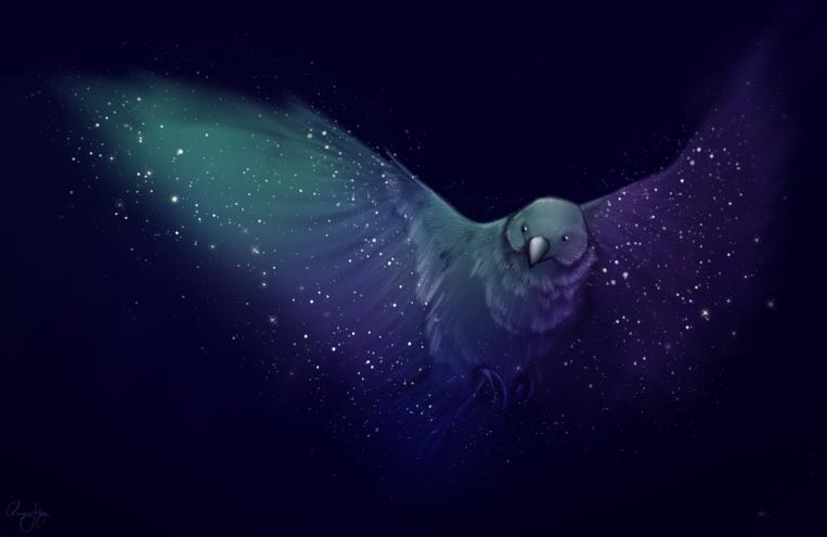 aurorabird