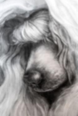 Poodle_Profil_Detail_02721.jpg